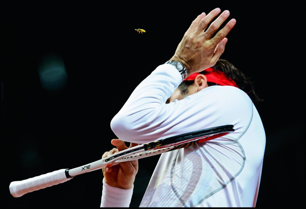 Switzerland's Davis Cup team member Roger Federer brushes a wasp away during a practice session in Fribourg