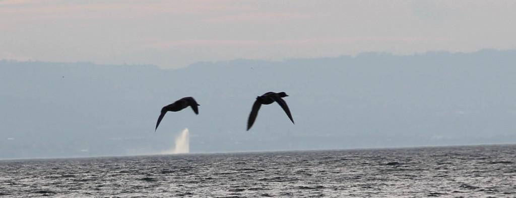 Birds over jet d'eau 3