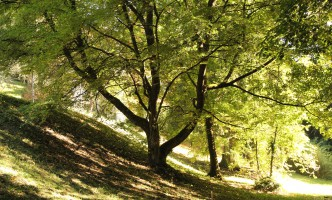 Trash and Trees – the Rules and Regulations for both!