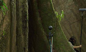 Recording the Sonic Footprint of the Rainforest – Film – Dusk Chorus