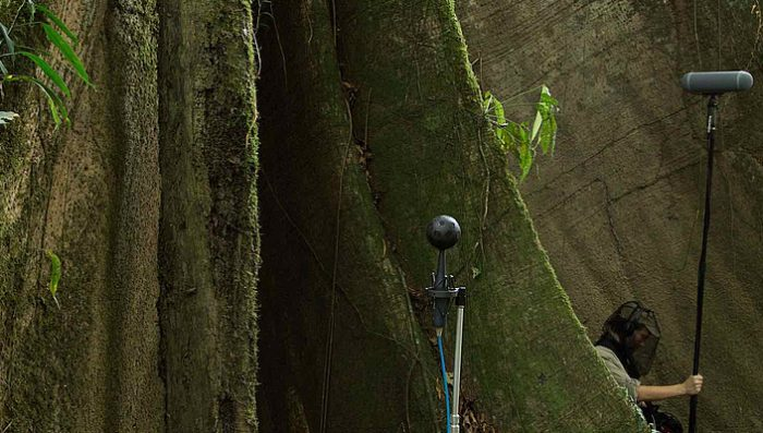 Recording the Sonic Footprint of the Rainforest – Film – Dusk Chorus