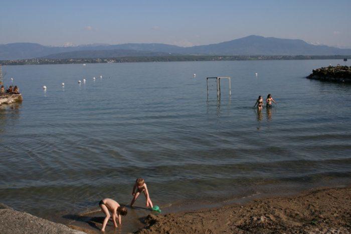 Duck fleas - Advice on swimming in the Geneva lake