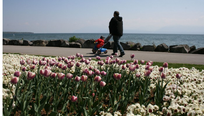 Tulips in Morges and Traffic in Nyon