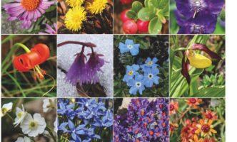 Christmas Present Idea –  Book on Alpine Flowers in English