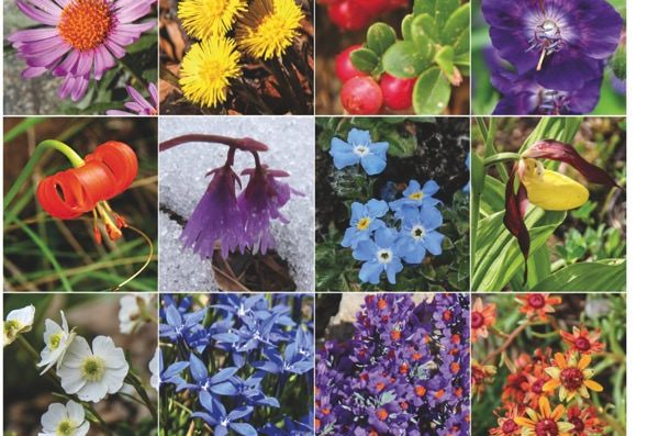 Christmas Present Idea –  Book on Alpine Flowers in English